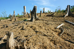Обезлесение, пень, климат изменения, среда обитания стоковое изображение rf