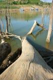 Обезлесение, пень, климат изменения, среда обитания стоковая фотография