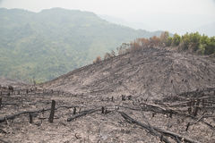 Обезлесение, после лесного пожара, стихийное бедствие, Лаос стоковое фото rf