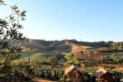 обезлесение Стоковые Изображения
