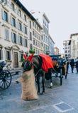 Обедающий лошади на улице в Италии Стоковое Изображение