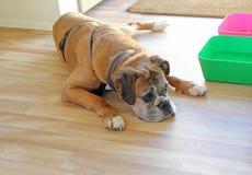 Обедающий собаки ждать Стоковые Фото