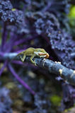 Обедающий ящерицы Стоковые Изображения RF