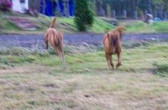 Обе собаки побежали нерезкость Стоковое фото RF