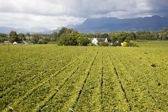 Обзор виноградника Южной Африки стоковое изображение