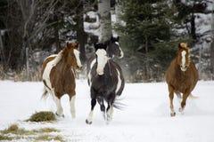 обзор лошади Стоковое Изображение RF