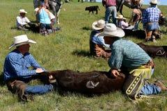 Обзор скотин и клеймить на ранчо стоковая фотография rf