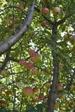 Обильно плодовитый Стоковое фото RF