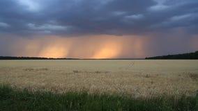 Облака и молния шторма в небе захода солнца над полем пшеницы Выравнивать ландшафт сток-видео
