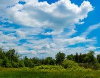 Облака лета над зеленым полем Стоковые Фото