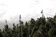 Облака над деревьями стоковое фото