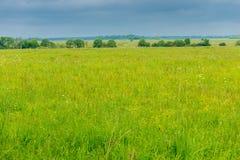 облака поля и проливного дождя зеленой травы весной Стоковое Изображение RF