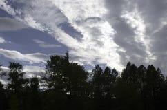 Облака цирруса над силуэтом деревьев стоковые изображения