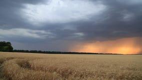 Облака шторма в небе захода солнца над полем пшеницы Выравнивать ландшафт сток-видео