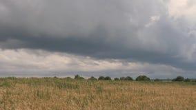 Облака шторма над желтым полем зерна сток-видео