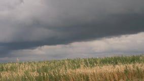Облака шторма над желтым полем зерна видеоматериал