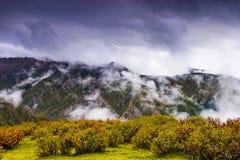 облака bushes Стоковые Фото