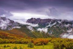 облака bushes Стоковое фото RF