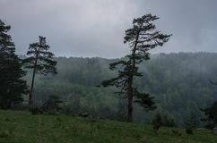 Облако нижнего яруса над лесом в горной области Zlatibor стоковое фото