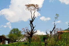 Облако с красивейшим валом Manali Индией Стоковые Фотографии RF