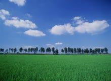 облако Стоковое фото RF