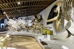 Область Дании - Зеландии - Копенгаген - музей естественной истории - Стоковое фото RF