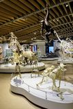 Область Дании - Зеландии - Копенгаген - музей естественной истории - Стоковая Фотография RF