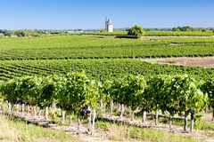 область Франции Бордо стоковые фотографии rf