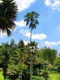 Облачное небо с длинным деревом дат стоковое фото