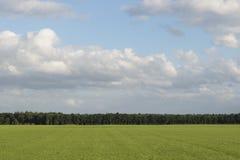 Облачное небо с травой и краем леса Стоковое фото RF