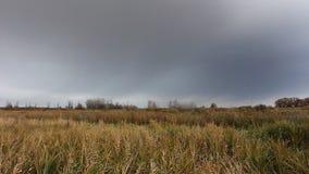Облачное небо шторма над полем акции видеоматериалы