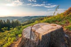 Облесенный ландшафт, пень дерева спруса выреза на луге Стоковые Изображения