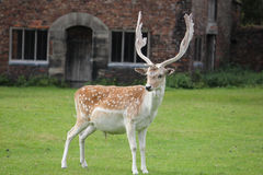 облицовка оленей камеры antlers Стоковое Изображение