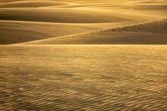 Обломоки в дюнах стоковая фотография rf