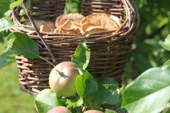 Обломоки Яблока в яблоне стоковое изображение rf