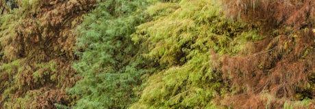 Облыселая листва кипариса в осени Стоковые Изображения