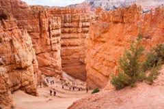 Обматывая змейчатый курс в каньоне Bryce стоковые фотографии rf