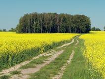 Обматывая проселочная дорога через желтое поле рапса стоковое изображение rf
