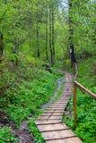 Обматывая путь в лесе стоковое изображение