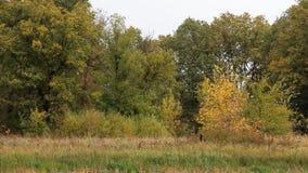 Обмотайте встряхивания ветви деревьев в лесе осени сток-видео