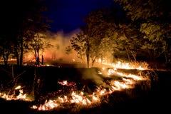 Обмотайте дуть на пламенеющие деревья во время лесного пожара Стоковая Фотография
