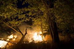 Обмотайте дуть на пламенеющие деревья во время лесного пожара Стоковое Изображение