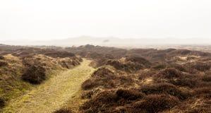 Обнаженное сиротливое дерево в тумане утра около пустой проселочной дороги Остров Texel, Нидерланд стоковое изображение