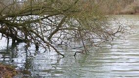 Обнаженные ветви дерева в воде - замедленном движении акции видеоматериалы