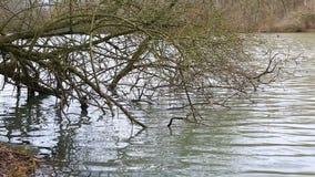 Обнаженные ветви дерева в воде сток-видео