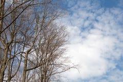 Обнаженные деревья и небо дневного времени стоковые изображения