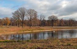 Обнаженные деревья отразили в поверхности воды небольшого озера стоковое фото rf