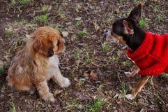 Обнаружение друга в парке стоковое фото
