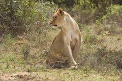 обнаруживать местонахождение prey стоковое изображение rf