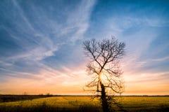 Обнимающ заход солнца - одно дерево с лучами солнца, зеленой травой и b Стоковая Фотография RF
